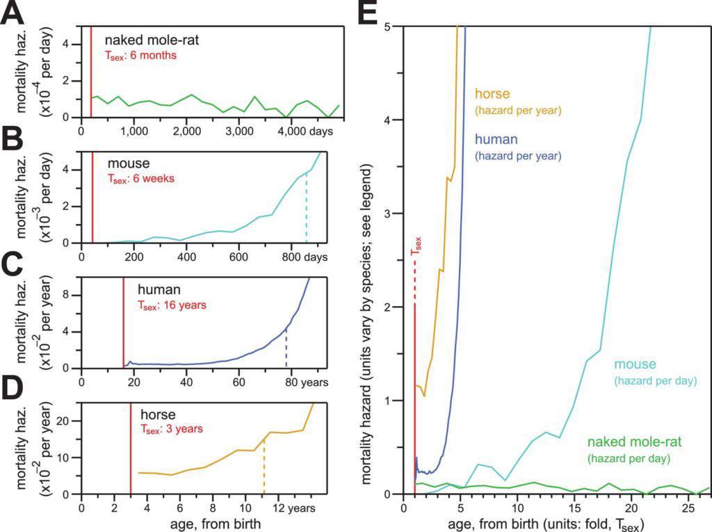 Calico aging study naked mole rat longevity