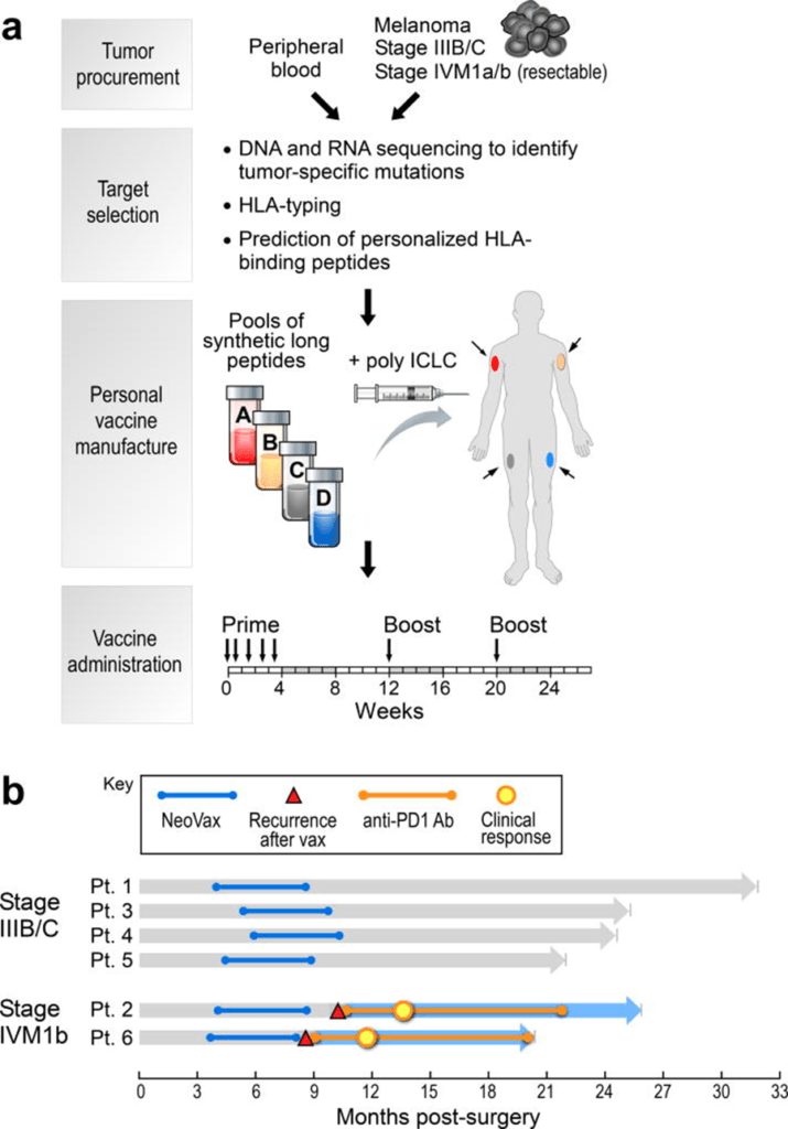 neoantigen clinical trial graphic