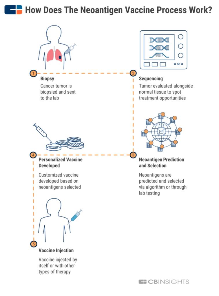 How personalized neoantigen vaccines work infographic