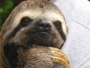 a beautiful sloth