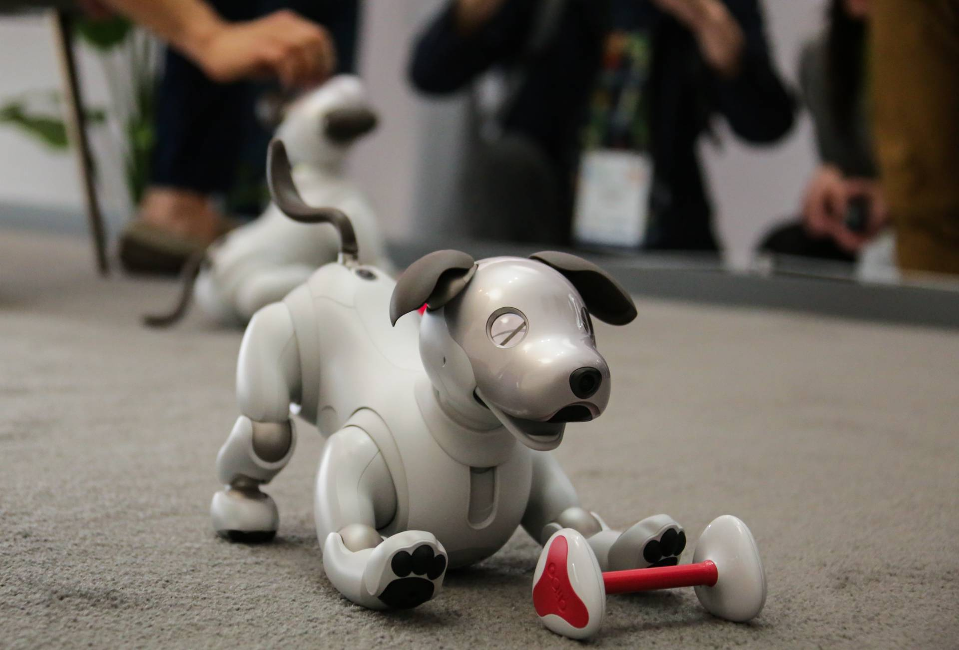 Sony's AIBO robotic dog
