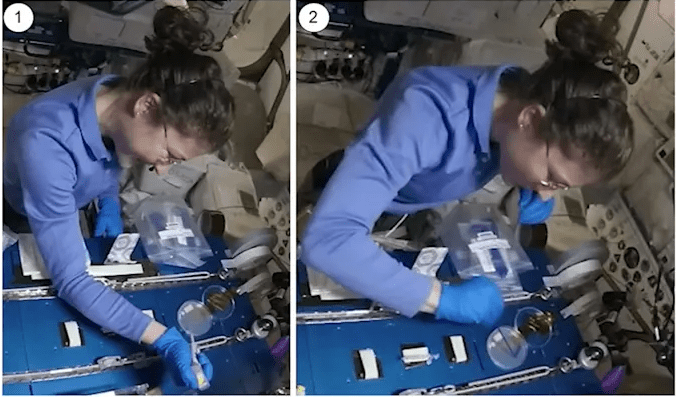 An astronaut in a space shuttle carrying out lab experiments